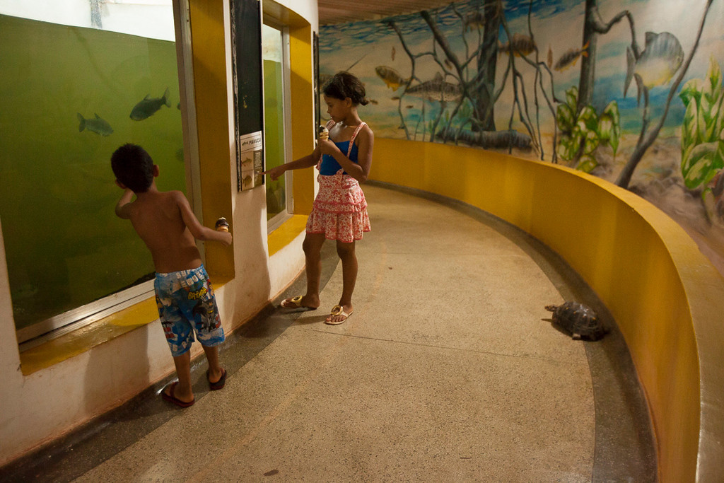 A Tortoise walks freely among children observing an old uncleaned tank in Cuiabá's local aquariam. The lack of water and freewalking of the animal demonstrates the lack of funding and organization in community funds.