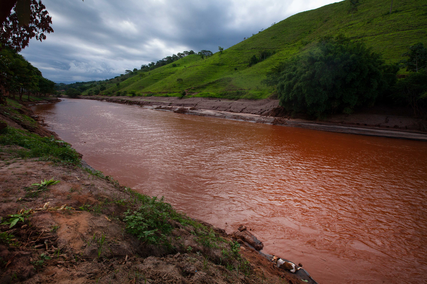 Mercury and Arsin now pollute the rivers. In the small town of Barra Longa, the Rio Do Carmo is a tributary that flows into the Rio Doce.