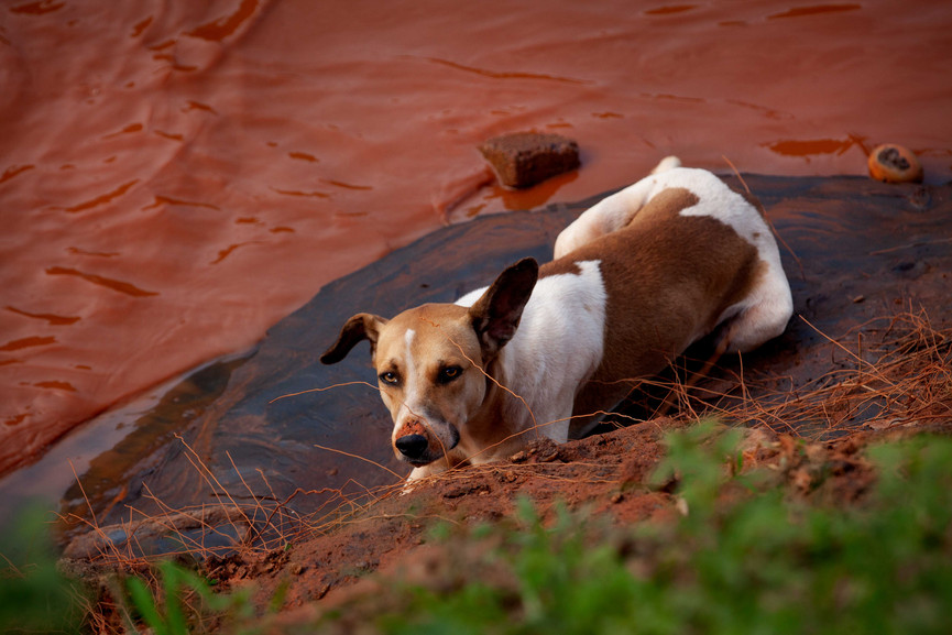 The effects of the mudslide displaced animals all throughout the region.