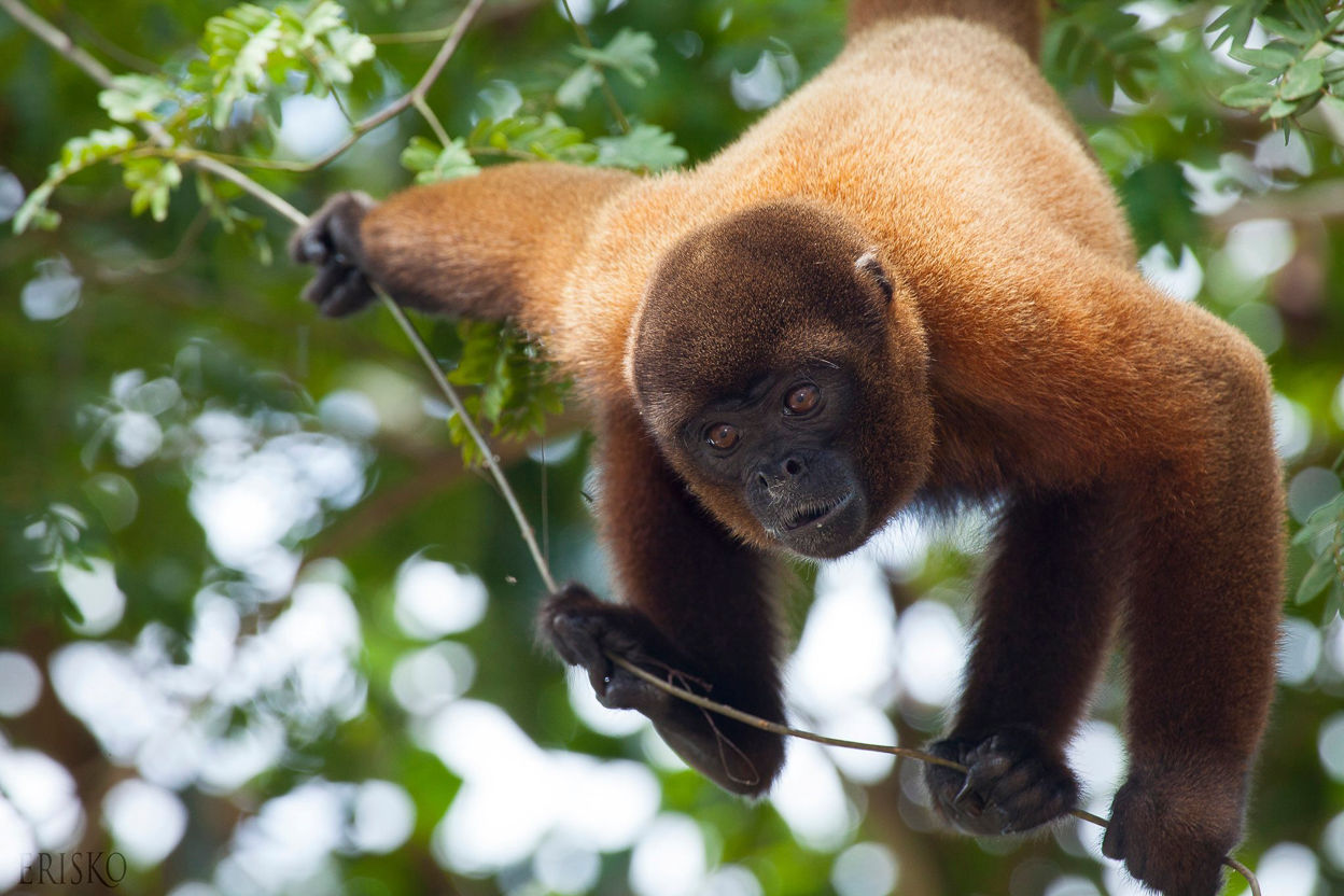 Tourist companies use ecotourism practices to reintroduce abused animals into the wild.