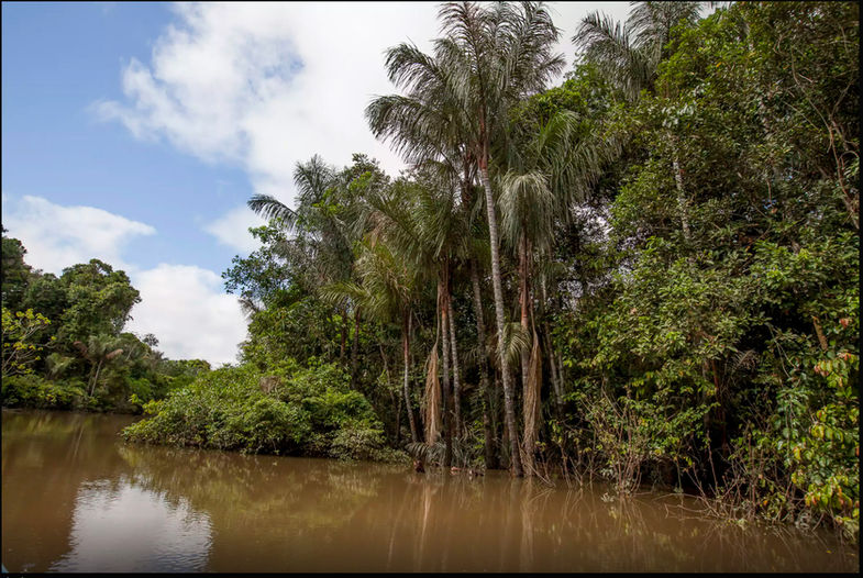 Instead of four seasons, the Amazon is divided into rainy seasons, and dry seasons.