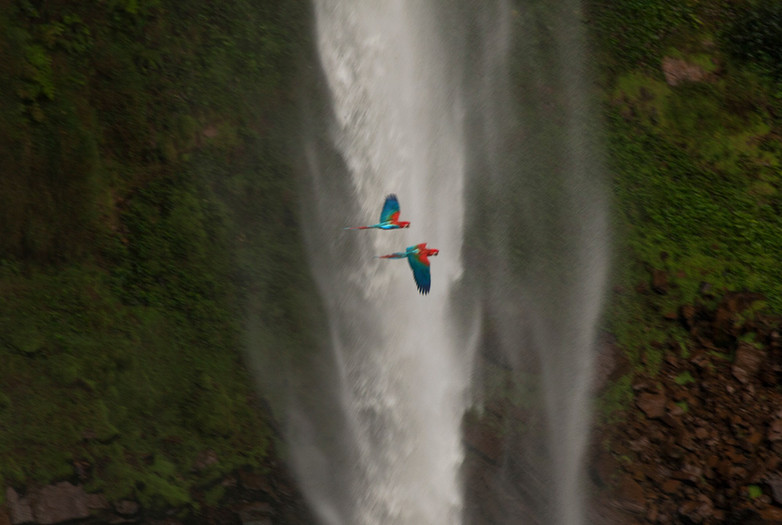 """Two macaw parrots fly over the Veu Da Noiva waterfall in the tropical savanna of Mato Grosso (otherwise known as the Brazilian """"Cerrado""""). The higher parts of the savanna create an opportunity for hydroelectric power which local governments have installed dams to harness.  However environmentalists argue that these dams created will mess entirely with the surrounding ecosystem."""