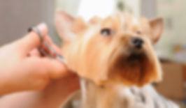 dog-grooming-1.jpg