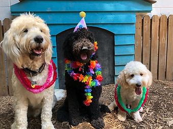 canine socialization pack play