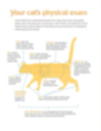 Cat Physical Exam.jpg