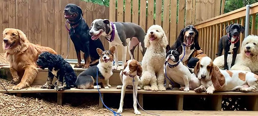 canine socialization training birthday pawties Acworth Kennesaw