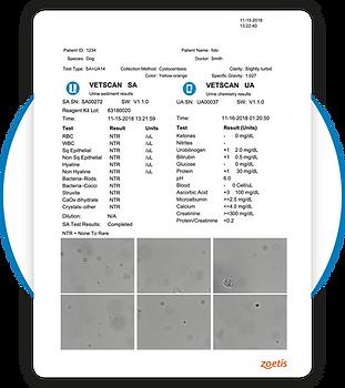 Vetscan SA UA Results Printout Urinalysis