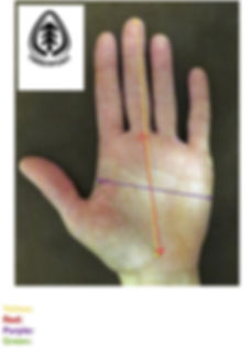 hand measurement pdf.jpg