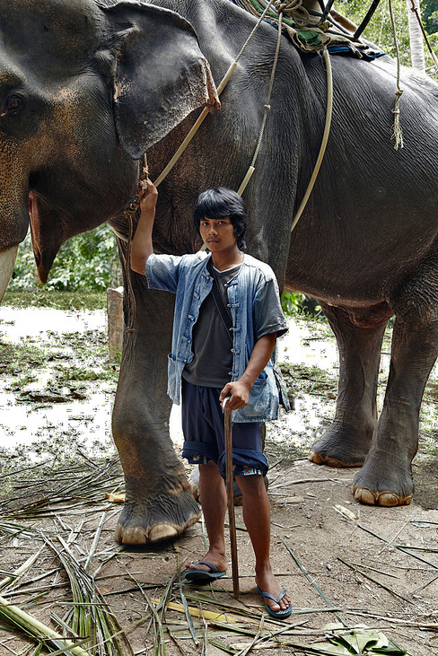 See and his Elephant