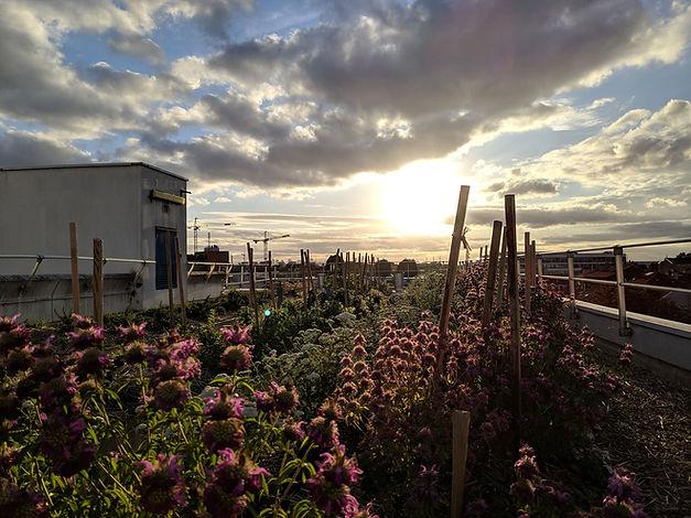 agriculture urbaine seine saint denis