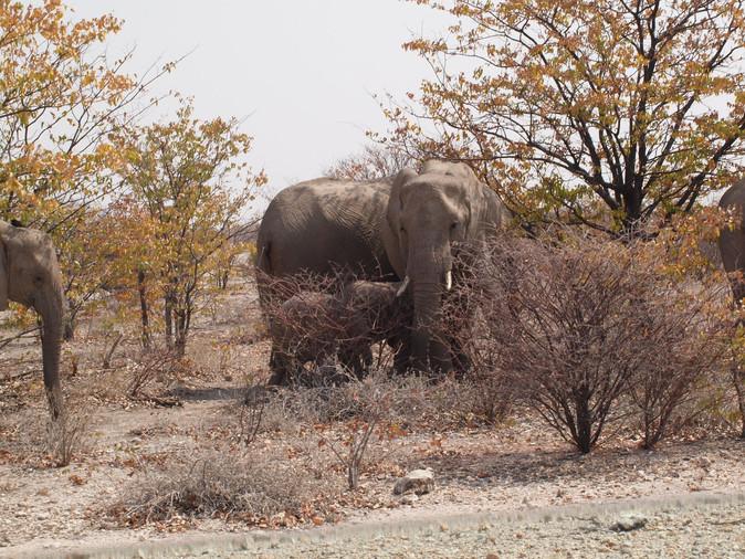 The wildlife of Etosha national park