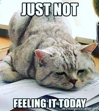 trött katt som inte vill skriva i magdansbloggen