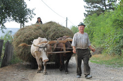 Hay cart brought home