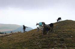 Sheep and shepherds