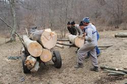 Transporting logs, Wallachia
