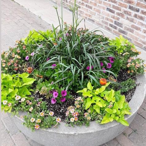 Annual flower Pot