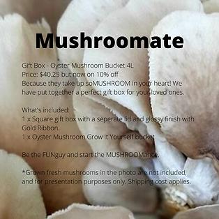 Gift Box - Oyster Mushroom Bucket 4L Pri
