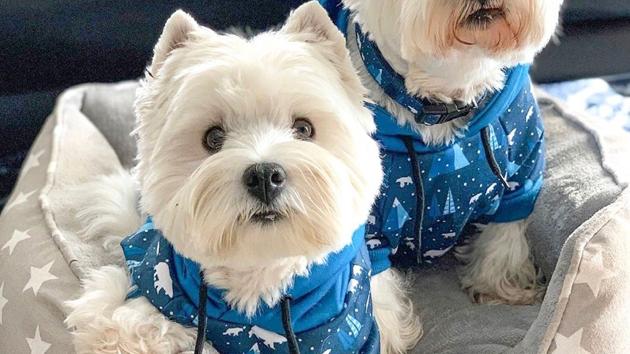 Coco & Pud Hoodie: Arctic Pup