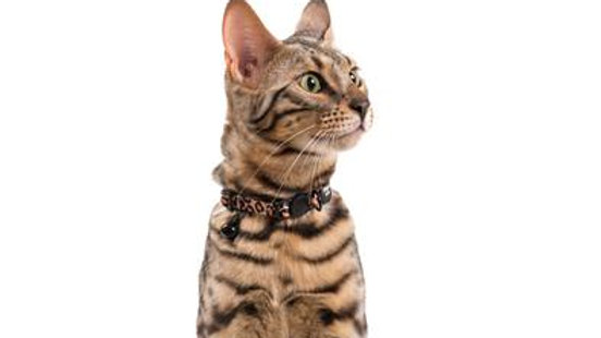 Pre-Order Cheetah Cat Collar