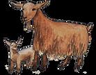 goats.png