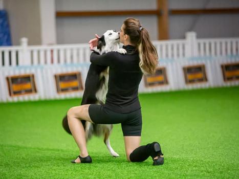 רוקדים עד הפסגה! הישג מרשים לרוני ופסח באליפות אירופה הפתוחה לריקודים עם כלבים