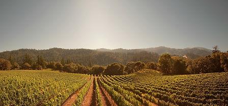 vin-1024x480-1.jpg