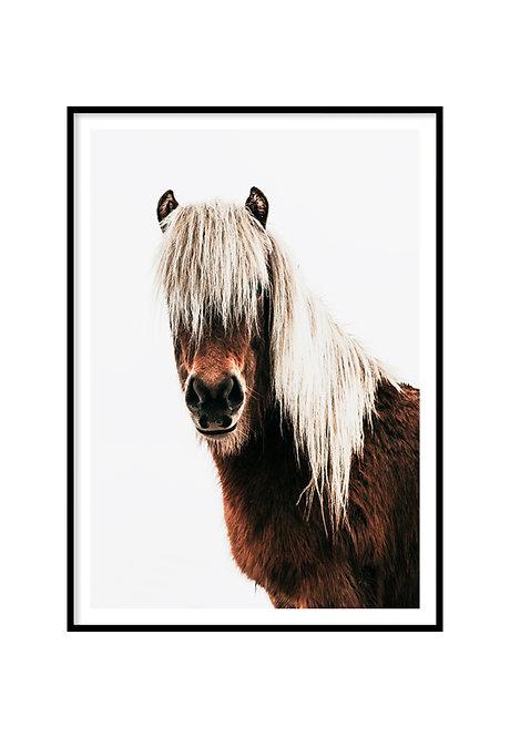 HORSE, PRINTABLE