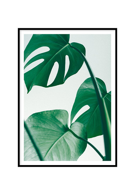 MONSTERA, PRINTABLE
