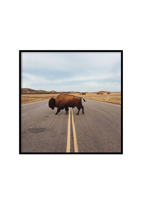 BISON CROSSING ROAD, PRINTABLE