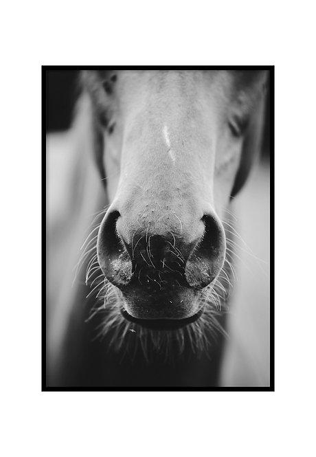 WILD HORSE, PRINTABLE