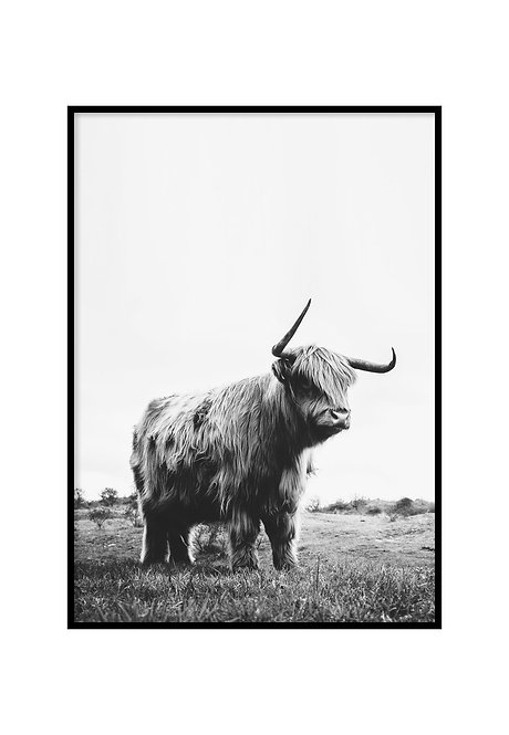 CATTLE, PRINTABLE