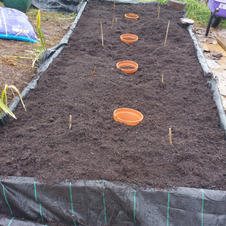 20210511_Asparagus bed done!