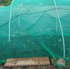 20210514_Brassica cage