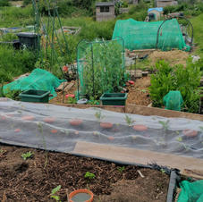 20210603 The brassica bed 2