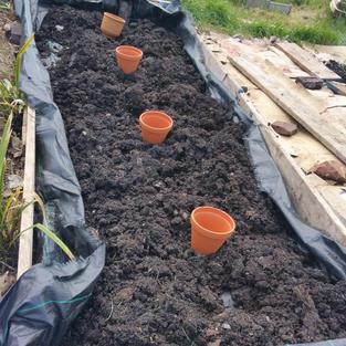 20210511_Planting plant pots