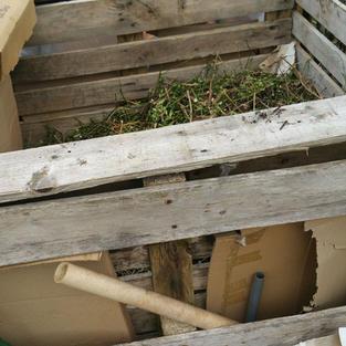 20210401_Compost bin