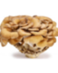 maitake-mushroom-powder-organic.jpg
