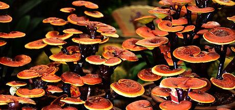 health-benefits-of-mushrooms-2.jpg