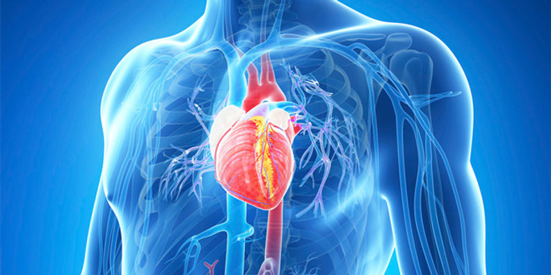 Heart-Health-is-Of-Course-Essential…But-How-Do-You-Maintain-a-Healthy-Heart.jpg