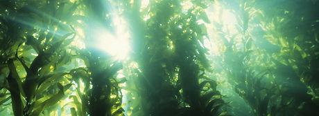 slider-BenefitsofMarinePhytoplankton.jpg