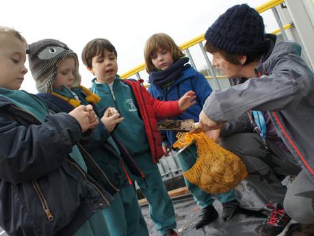 Tionscnamh Garraídóireachta na Scoile | School Garden Project