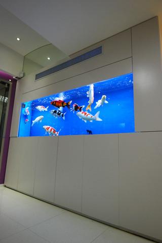 辦公室鯉魚魚缸