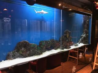 蘭桂芳巨型鯊魚缸