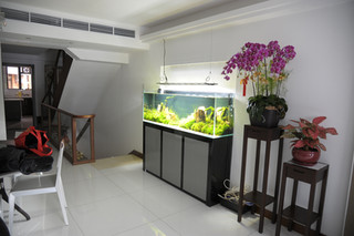 九龍塘獨立居珊瑚魚缸