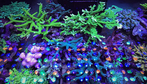 Orphek Atlantik V4 LED Aquarium Lighting