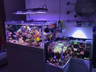 住宅雙子珊瑚缸