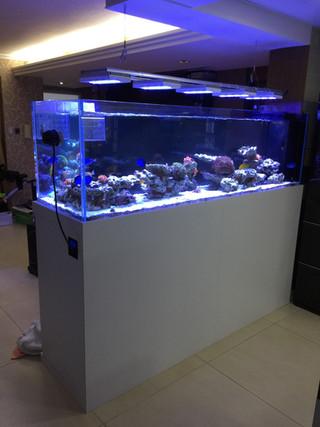大埔獨立屋珊瑚及海水魚缸
