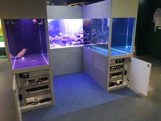 龍吐珠七海巨鯉珊瑚展示缸