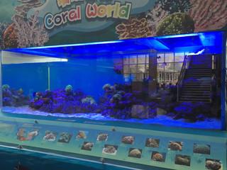 珊瑚及海水魚展示缸