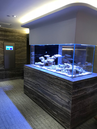 辦公室魚缸